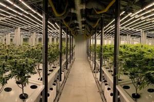 Cannabis-Aktien: Auf die Technologie kommt es an!